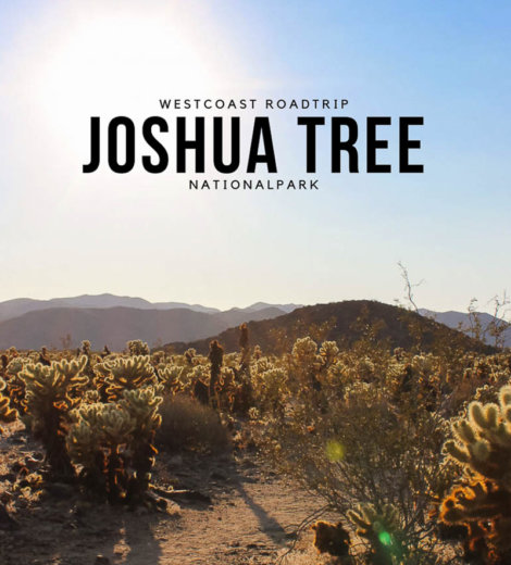 Westcoast Roadtrip <br /> Joshua Tree Nationalpark