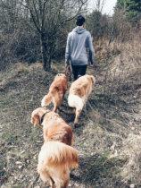 Werbung  Urlaub mit Hund und BestFewo