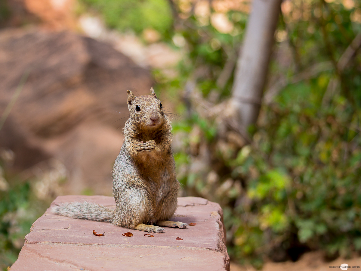Zion National Park Utah Roadtrip Travel Diary Squirrel