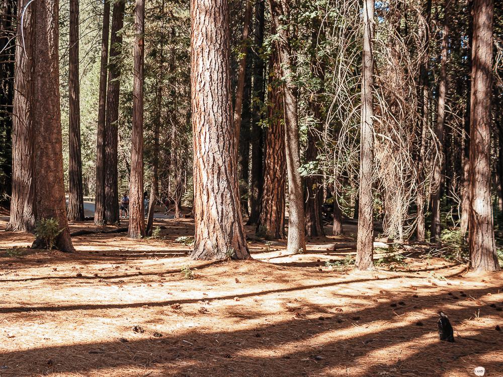Yosemite National Park travel Diary Westoast California Roadtrip Hike