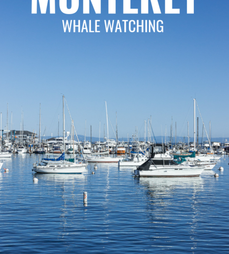 Westcoast Roadtrip </br> Whale Watching in Monterey