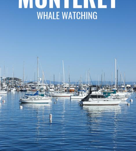 Westcoast Roadtrip </br> Whale Watching in Monterey