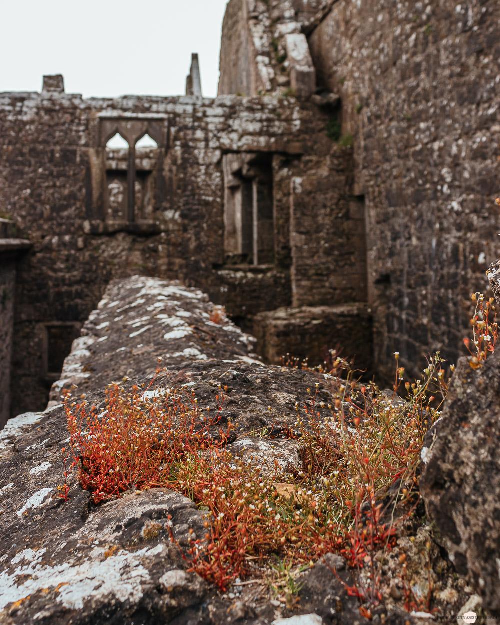 Irland Ross Errilly Friary